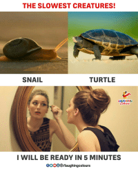 Turtle, Indianpeoplefacebook, and Creatures: THE SLOWEST CREATURES!  SNAIL  TURTLE  LAUGHING  I WILL BE READY IN 5 MINUTES  0000 D/laughingcolours