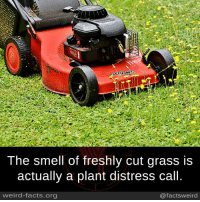 Distression: The smell of freshly cut grass is  actually a plant distress call.  weird-facts.org  @facts weird