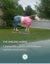 "Children, Ironic, and Horse: THE SMILING HORSE  A Beacon of strength for children about to  experience dental services. the fact that it says ""experience dental services"" instead of something like ""receive dental services"" is what made me cry @ this because it makes it sound so traumatic"
