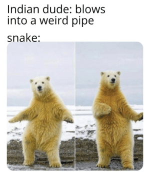 The snake charmer is called a 'sapera' by 07_diDact MORE MEMES: The snake charmer is called a 'sapera' by 07_diDact MORE MEMES