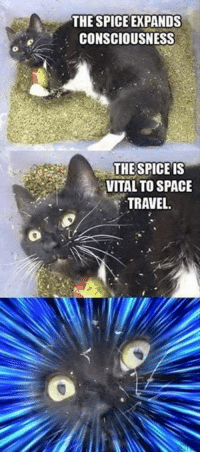 The spice sends you to hyperspace.: THE SPICE EXPANDS  CONSCIOUSNESS  THE SPICE IS  VITAL TO SPACE  TRAVEL. The spice sends you to hyperspace.