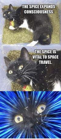 Dank, 🤖, and Spaces: THE SPICE EXPANDS  CONSCIOUSNESS  THE SPICE IS  VITAL TO SPACE  TRAVEL.