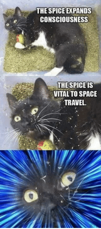 Memes, Connected, and Space: THE SPICE EXPANDS  CONSCIOUSNESS  THE  SPICE IS  VITAL TO SPACE  TRAVEL When you're feeling spiritually connected to the universe