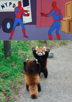 The Spider-Man meme inspired copycats, probably just mysterio at it again.: The Spider-Man meme inspired copycats, probably just mysterio at it again.