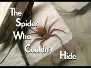 aquariadise:  housebatbetta:  casasstrophe:  my-skins-smothering—me:  urpoo:  devinleighbee:  karatam:  punch-a-your-buns:  captain-gumdrops:  bluhbluhhugedork:      The Spider Who Couldn't Hide    I HATE SPIDERS BUT OH MY GOD THIS WAS SO FUCKING HILARIOUS HELP  he's so cute when he digs and throws sand over himself.  #WHEN HE BURIES HIMSELF THE VOICE MUFFLES I CRIED      I'm actually wiping tears from laughing so much  Reblogging because I know some of you will appreciate this… I've seen this video at least 15 times and I literally cried from laughing every single time. : The  Spider  Who  Couldn't  Hide aquariadise:  housebatbetta:  casasstrophe:  my-skins-smothering—me:  urpoo:  devinleighbee:  karatam:  punch-a-your-buns:  captain-gumdrops:  bluhbluhhugedork:      The Spider Who Couldn't Hide    I HATE SPIDERS BUT OH MY GOD THIS WAS SO FUCKING HILARIOUS HELP  he's so cute when he digs and throws sand over himself.  #WHEN HE BURIES HIMSELF THE VOICE MUFFLES I CRIED      I'm actually wiping tears from laughing so much  Reblogging because I know some of you will appreciate this… I've seen this video at least 15 times and I literally cried from laughing every single time.