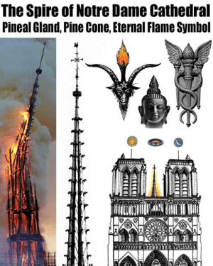 pineal gland: The Spire of Notre Dame Cathedral  Pineal Gland, Pine Cone, Eternal Flame Symbol