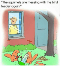 """lol hahahaha foreals wheredaweed 420: """"The squirrels are messing with the bird  feeder again!"""" lol hahahaha foreals wheredaweed 420"""
