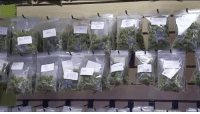 The state of Florida has started to issue medical marijuana identification cards for patients and caregivers. The Florida Department of Health's Office of Compassionate Use started the process Thursday by drafting applications and accepting completed applications for review, @news4jax reports. The application requires a doctor's prescription, a $75 fee, copy of a Florida driver's license or identification card, and a 2″ by 2″ passport photo. Physical ID cards have not yet been issued, and all patients will be required to have the card in order to purchase medical cannabis. The ID cards expire 1 year after the doctor's initial prescription date. Under the new law, those suffering from cancer, epilepsy, glaucoma, HIV-AIDS, post-traumatic stress disorder (PTSD), Parkinson's disease, ALS, multiple sclerosis, or Crohn's disease qualify for a medical marijuana prescription. Doctors can also prescribe it for similar conditions. Over 70 percent of Florida voters supported the medical marijuana amendment in the 2016 election. 🍁 (Via @wsvn) @worldstar WSHH: The state of Florida has started to issue medical marijuana identification cards for patients and caregivers. The Florida Department of Health's Office of Compassionate Use started the process Thursday by drafting applications and accepting completed applications for review, @news4jax reports. The application requires a doctor's prescription, a $75 fee, copy of a Florida driver's license or identification card, and a 2″ by 2″ passport photo. Physical ID cards have not yet been issued, and all patients will be required to have the card in order to purchase medical cannabis. The ID cards expire 1 year after the doctor's initial prescription date. Under the new law, those suffering from cancer, epilepsy, glaucoma, HIV-AIDS, post-traumatic stress disorder (PTSD), Parkinson's disease, ALS, multiple sclerosis, or Crohn's disease qualify for a medical marijuana prescription. Doctors can also prescribe it for similar conditions. O