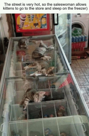 I would have melt if there aint a freezer.: The street is very hot, so the saleswoman allows  kittens to go to the store and sleep on the freezer)  YEN I would have melt if there aint a freezer.