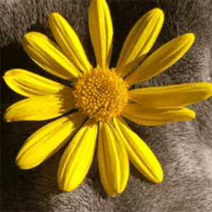 the-sunflower-one: Look this beautiful puppy: the-sunflower-one: Look this beautiful puppy