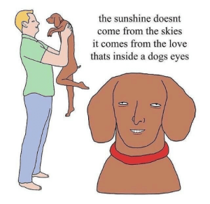 Dogs, Love, and Sunshine: the sunshine doesnt  come from the skies  it comes from the love  thats inside a dogs eyes