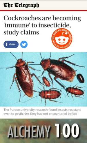 They're..evolving: The Telegraph  Cockroaches are becoming  immune' to insecticide,  study claims  meme was made  Fais was NOT made  f share  The Purdue university research found insects resistant  even to pesticides they had not encountered before  ALCHEMY 100  or red  Instagram They're..evolving