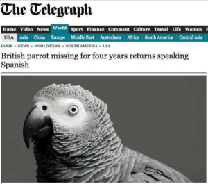 me🐦irl by gazugaXP FOLLOW 4 MORE MEMES.: The Telegraplh  Home Video News World Sport Finance Comment Culture Travel Life Women F  USA Asia China Burope Middle East Australasia Africa South America Central Asia  HOME NEWS WORLD NEWS NORTH AMERICA USA  British parrot missing for four years returns speaking  Spanish me🐦irl by gazugaXP FOLLOW 4 MORE MEMES.
