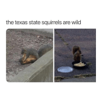 Texas, Wild, and Girl Memes: the texas state squirrels are wild damn they freaky