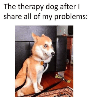 Dogs, Dog, and All: The therapy dog after l  share all of my problems: Do therapy dogs go to therapy?