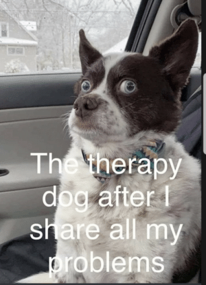 You are such a great listener buddy: The therapy  dog after  share all my  problems You are such a great listener buddy
