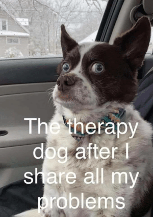 Therapy dog is a good listener: The therapy  dog after  share all my  roblems Therapy dog is a good listener