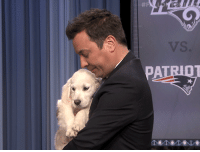 The Tonight Show puppies predict the Super Bowl results.: The Tonight Show puppies predict the Super Bowl results.