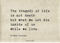 Life, Memes, and Death: The tragedy of life  is not death  but what we let die  inside of us  while we live  Norman Cousins  THINKING MINDS