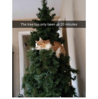@hilarious.ted is my favourite animal memes page: The tree has only been up 20 minutes @hilarious.ted is my favourite animal memes page