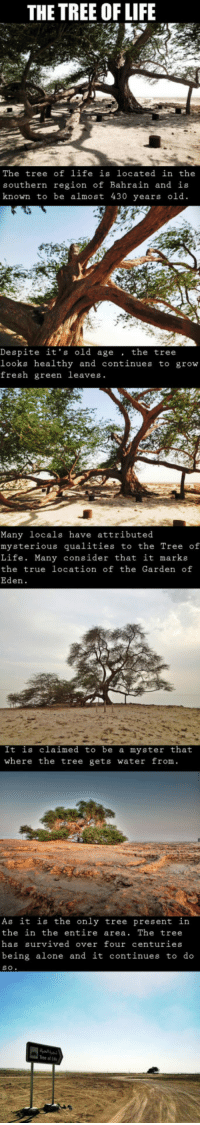 """<p>Miraculous Survival In The Desert.<br/><a href=""""http://daily-meme.tumblr.com""""><span style=""""color: #0000cd;""""><a href=""""http://daily-meme.tumblr.com/"""">http://daily-meme.tumblr.com/</a></span></a></p>: THE TREE OF LIFE  The tree of life is located in the  southern region of Bahrain and is  known to be almost 430 years old.  Despite it's old age. the tree  looks healthy and continues to grow  fresh green leaves.  Many locals have attributed  mysterious qualities to the Tree of  Life. Many consider that it marks  the true location of the Garden of  Eden.  It is claimed to be a myster that  where the tree gets water from.  As it is the only tree present in  the in the entire area. The tree  has survived over four centuries  being alone and it continues to do  s O  ree of Li <p>Miraculous Survival In The Desert.<br/><a href=""""http://daily-meme.tumblr.com""""><span style=""""color: #0000cd;""""><a href=""""http://daily-meme.tumblr.com/"""">http://daily-meme.tumblr.com/</a></span></a></p>"""