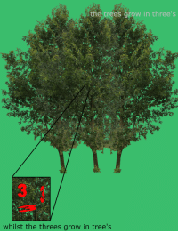 Trees, Grow, and Whilst: the trees grow in three's  whilst the threes grow in tree's