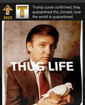 The Trump Curse might be a real thing...: The Trump Curse might be a real thing...