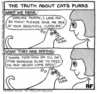 Beautiful, Cats, and Dogs: THE TRUTH ABOUT CATS PURRS  el WHAT WE HEAR:  DARLING MUMMY, I LOVE YOU  SO MUCH PLEASE GIVE ME ONE  M  (OF BEAUTIFUL cuDDLES  CoC  NR  WHAT THEY ARE SAYING:  GIMME FOOD NOW OR ILL GO  FIND SOMEONE ELSE TO FEED  ME AND NEVER COME BACK!  PURR  FACEBOOK CO  ON THE PROUL CAT CARTOONS The Truth about Cats... #Dogs #Iloveofftheleashdogcartoons #Rupertfawcett #Offtheleash