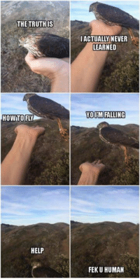 Help, Never, and Human: THE TRUTHIS  IACTUALLY NEVER  LEARNED  OUM FALLING  HOWTO FLY  HELP  FEK U HUMAN