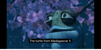 The turtle from Madagascar 5.