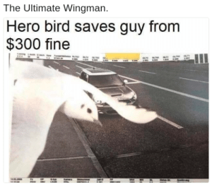Memes, Hero, and Heros: The Ultimate Wingman  Hero bird saves guy from  $300 fine Not all heros fly using a cape via /r/memes https://ift.tt/2MPCPou
