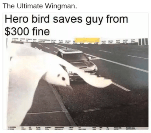 Hero, Heros, and Fly: The Ultimate Wingman.  Hero bird saves guy from  $300 fine Not all heros fly using a cape