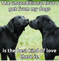 Dogs, Love, and Memes: The unconditional love  I  The get from my dogs  is the best kind  of love  there is.  id Ginger brea  oflcikr <3