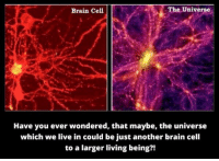 Memes, 🤖, and Cell: The Universe  Brain Cell  Have you ever wondered, that maybe, the universe  which we live in could be just another brain cell  to a larger living being?! This is an actual theory...