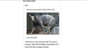 "Las Vegas, Bear, and Video: the-vegas-video:  jzul  have you ever seen a bear with no fur  now you have  i showed my mum and she said ""he looks a  bit bare"" AND WE'VE BEEN LAUGHING AT IT  FOR THE PAST 204839 YEARS Bare Bear"