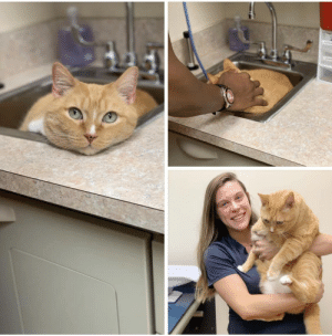 Thank You, Jobs, and Fun: The vet clinic writes: Since Mr. Gizmo was such a big fan of our sink we decided it was the perfect place to take his vitals! Thank you for making our jobs so fun and easy ❤️🐾