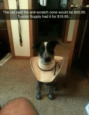 Scratch, Anti, and Tractor Supply: The vet said the anti-scratch cone would be $50.00  Tractor Supply had it for $19.95.. If it works, its not stupid