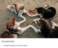 Dank, Husky, and Satan: the-vexed vortex:  Huskies trying to summon satan