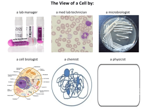 """Smooth, The View, and Chemist: The View of a Cell by:  a microbiologist  a lab manager  a med lab technician  NitroTAG  # JTTA- 29  ml  1""""x 1  GA Internation  www.Labtag.co  bal  com  GA  w  0.5  Te  a cell biologist  a chemist  a physicist  Mtochondria  Intermediate  filament  Plasma  membrane  Ribosomes  - Microtubule  Rough endoplasmic  reticulum  Centrosome  Nucleus  Microllament  Nucleolus  Chromatina  -Lysosome  Golgi-  apparatus  Smooth endoplasmie  reticulum  Secretory vesicle  Golgi vesicle  Peroxisome  Cytoplasm  Vacuole Posting here for everyone to enjoy!"""