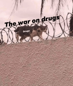 S n e a k: The war on drugs  Drugs S n e a k