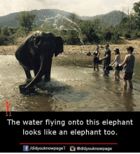 Memes, Elephant, and Water: The water flying onto this elephant  looks like an elephant too  /didyouknowpagel @didyouknowpage