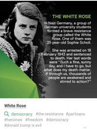 "Donald Trump, Brave, and Death: THE WHITE ROSE  In Nazi Germany, a group of  German university students  formed a brave resistance  group called the White  Rose. One of them was  21-year-old Sophie Scholl.  She was arrested on 18  ebruary 1943 and sentenced  to death. Her last words  were ""Such a fine, sunny  day, and I have to go, but  what does my death matter,  if through us, thousands of  people are awakened and  stirred to action?  White Rose  a democracy #the resistance #partisans  #heroïnes #freedom #democracy  #donald trump is evil"