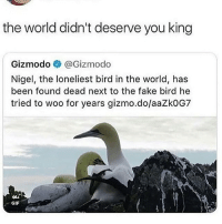 Fake, Gif, and Memes: the world didn't deserve you king  Gizmodo @Gizmodo  Nigel, the loneliest bird in the world, has  been found dead next to the fake bird he  tried to woo for years gizmo.do/aaZk0G7  似.  GIF follow @dustylalas ill fb some of u cwd