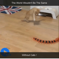 Cats, Cute, and Funny: The World Wouldn't Be The Same  Without Cats #cats #funny #cute #catlovers