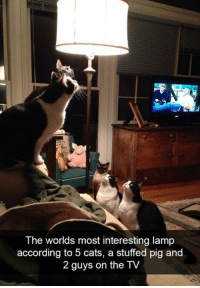Cats, Dank, and According: The worlds most interesting lamp  according to 5 cats, a stuffed pig and  2 guys on the TV Do the moths know about this yet?
