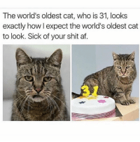 He is not having any of it 😂💁🏼😹😾😻 @to0muchsauc3: The world's oldest cat, who is 31, looks  exactly how l expect the world's oldest cat  to look. Sick of your shit af He is not having any of it 😂💁🏼😹😾😻 @to0muchsauc3