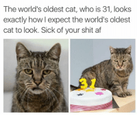 oldest cat: The world's oldest cat, who is 31, looks  exactly how l expect the world's oldest  cat to look. Sick of your shit af