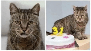 The worlds oldest cat, who is 31, looks exactly how I expect the worlds oldest cat to look. Sick of your shit af: The worlds oldest cat, who is 31, looks exactly how I expect the worlds oldest cat to look. Sick of your shit af