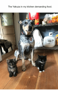 Cute, Food, and Animal: The Yakuza in my kitchen demanding food  Garden 50+ Cute Animal Pictures To Make Your Day Better