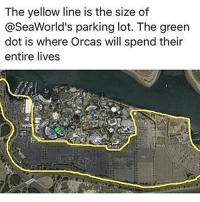 Memes, Orcas, and 🤖: The yellow line is the size of  @SeaWorld's parking lot. The green  dot is where Orcas will spend their  entire lives I fly over here recently... if enough people wanted it to close and made enough noise then @seaworldorlando would close...